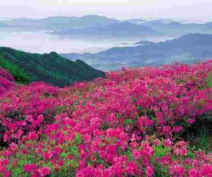 Tourists will not be able to see the Valley of Flowers due to the Corona hit …..