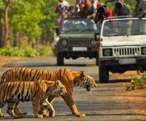 Jim Corbett National Park suffered loss of 10.50 crores due to lockdown …….