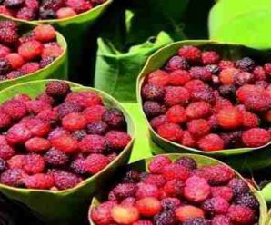 """Due to lockdown, hill fruit """"KAFAL"""" was not available in the markets."""